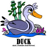 duckbylorenzo