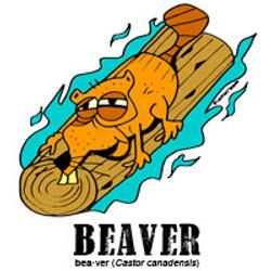 beaverbylorenzo