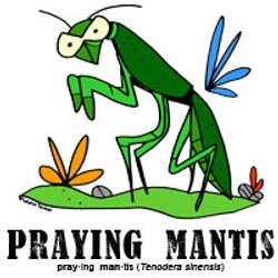prayingmantisbylorenzo