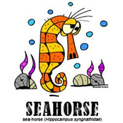 seahorsebylorenzo
