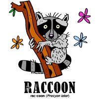 raccoonbylorenzo