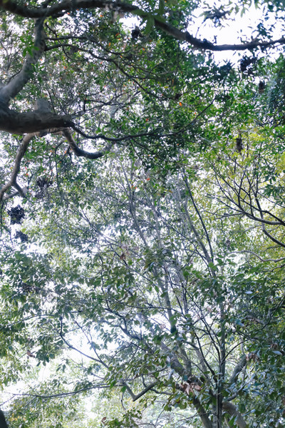ぶどうの樹 森のウェディング  前撮り撮影