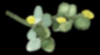 Plants_01_karui.png