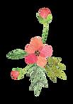 Flower_02_2_karui.png