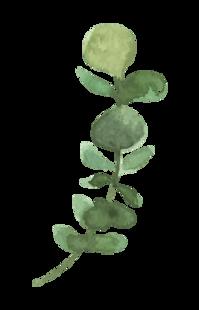 Plants_04_karui.png