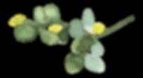 Plants_02_karui.png