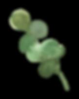 Plants_03_karui.png