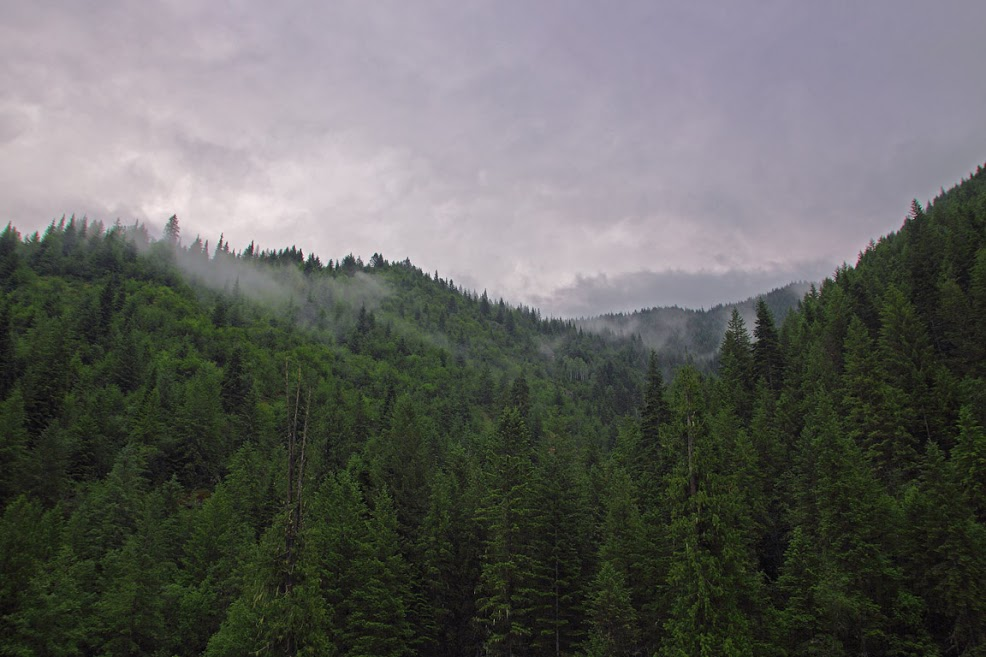 Clearwater_Forest_bg_20090606