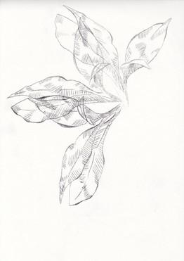 flor2.jpg