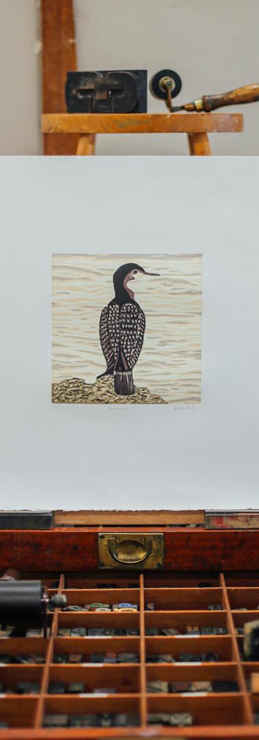 Cormorant By Debbie Hunter