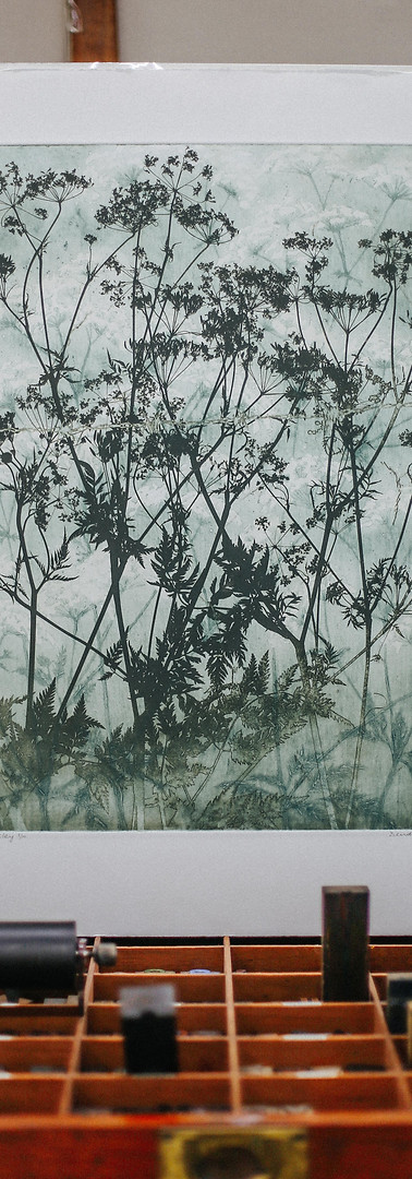 Cow Parsley By Dierdre McCrory