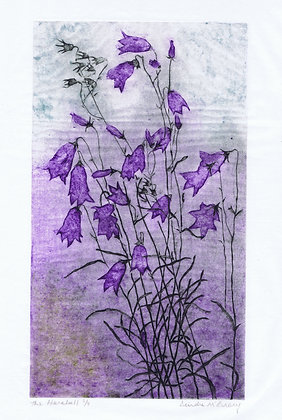 The Harebell