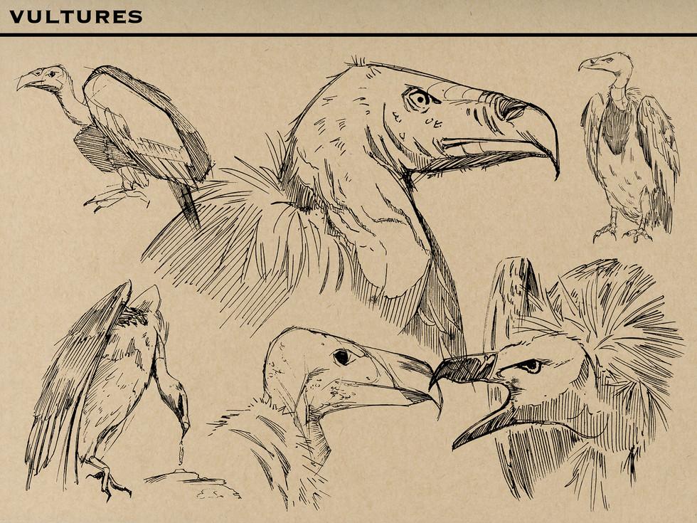 Vultures M.jpg