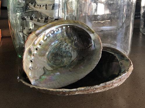 Abalone Shell (Small)