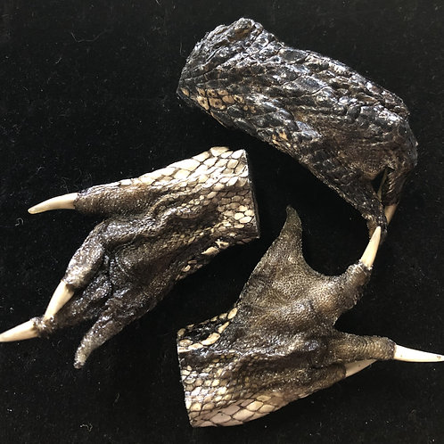 Louisiana Alligator Feet
