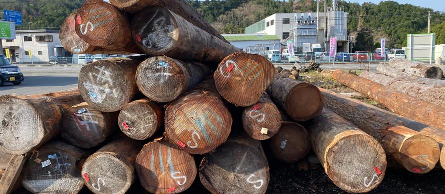 〜木になる木〜『いつも身近に木材を!!』米松シリーズ