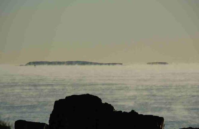 September 5-6 Bird Sightings; World Shorebird Weekend