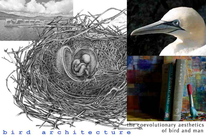 Bird Nest Architecture and Art; and mid-March Bird Sightings
