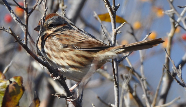April 2019 Peaks Island Bird Blog: What's Headed Our Way