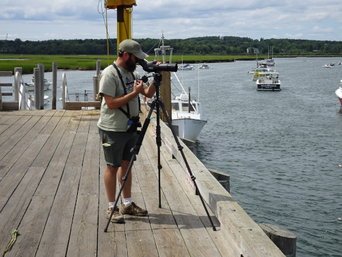 Part 2: Shorebirds passing through Southern Maine and World Shorebird Day