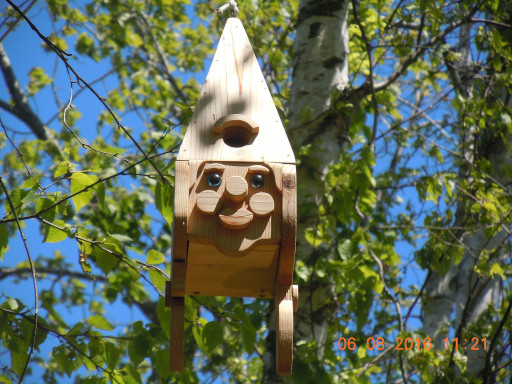 End of May to mid-June Bird Sightings