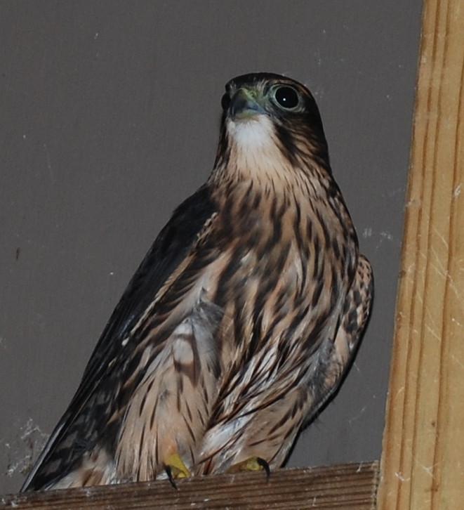End of Summer PI Community Bird Report - Part 2
