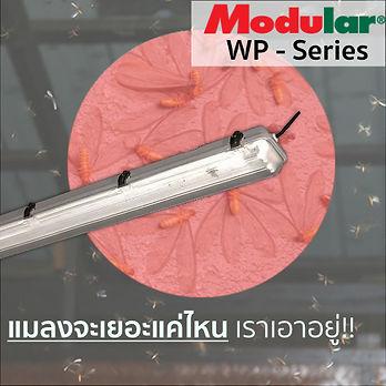 WP การตลาด.jpg