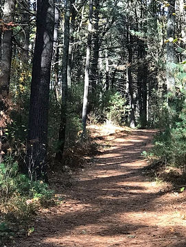 View down woods trail