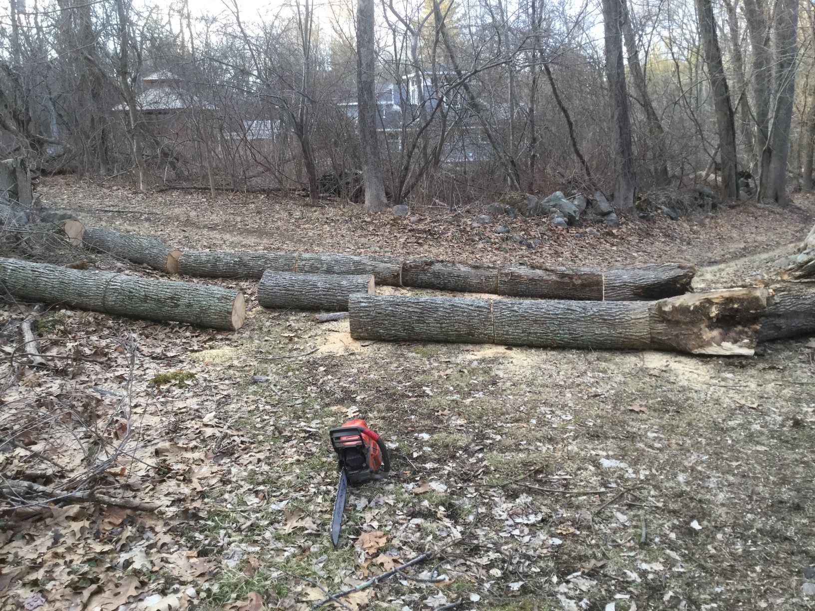 large sawn logs of fallen tree trunks, with chainsaw
