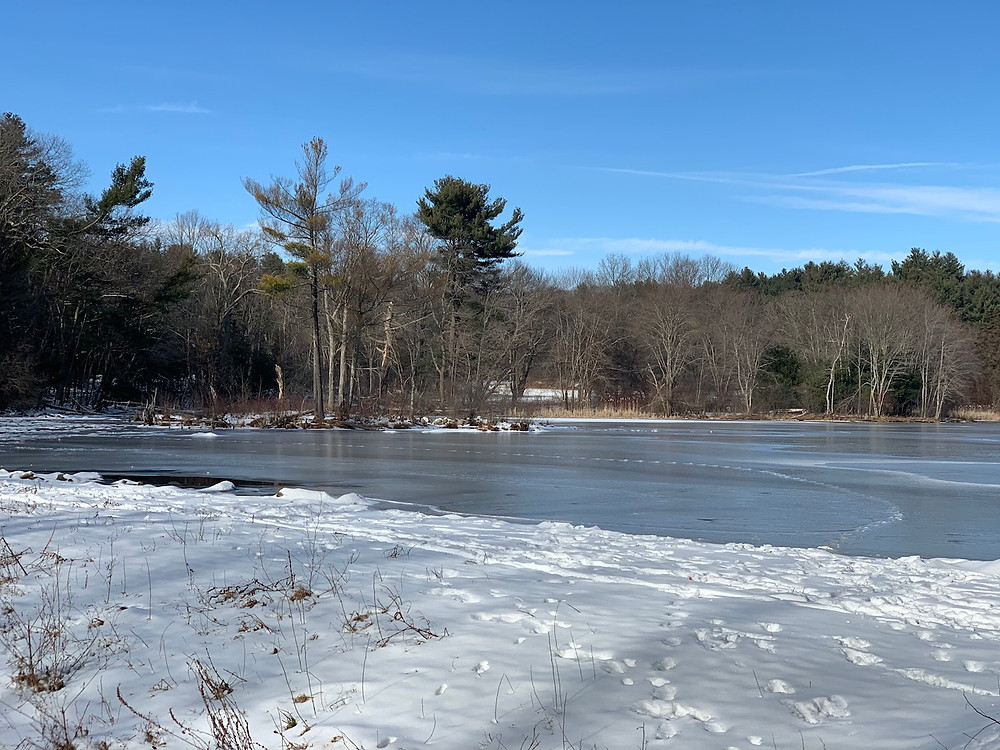 winter view of Hobbs Pond, iced in with snow on shore