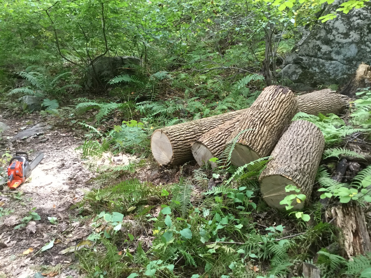 Sawn logs by Willow Road trail