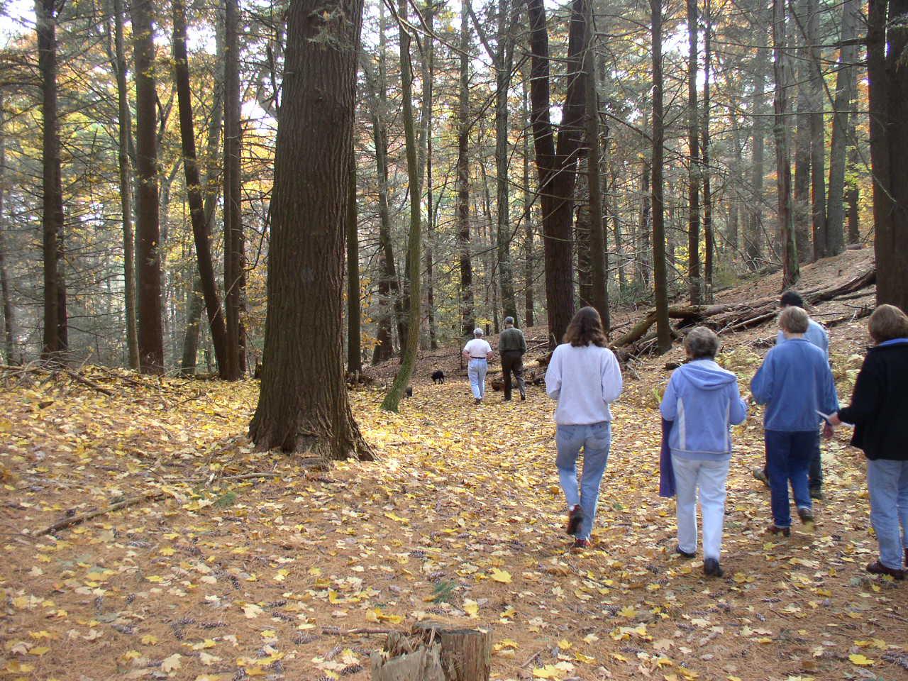 People walking in the Sears Land woods