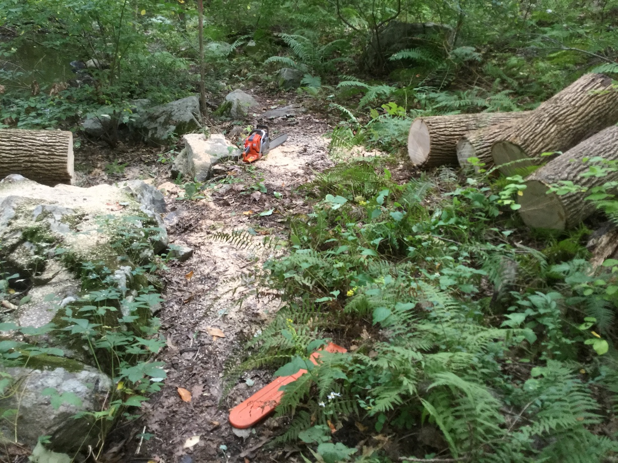 Willow Road trail cleared of fallen tree