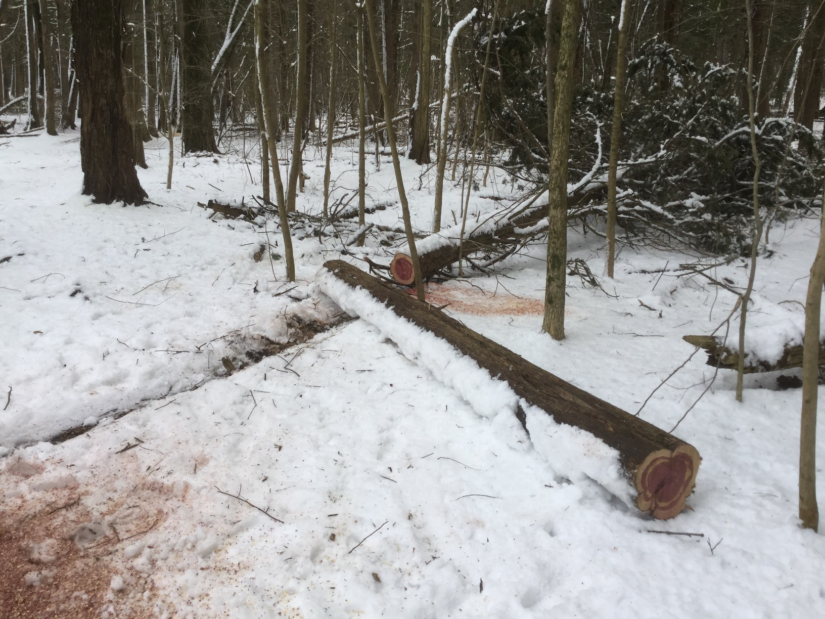 two long sawn logs of tree with red and tan wood on snowy ground