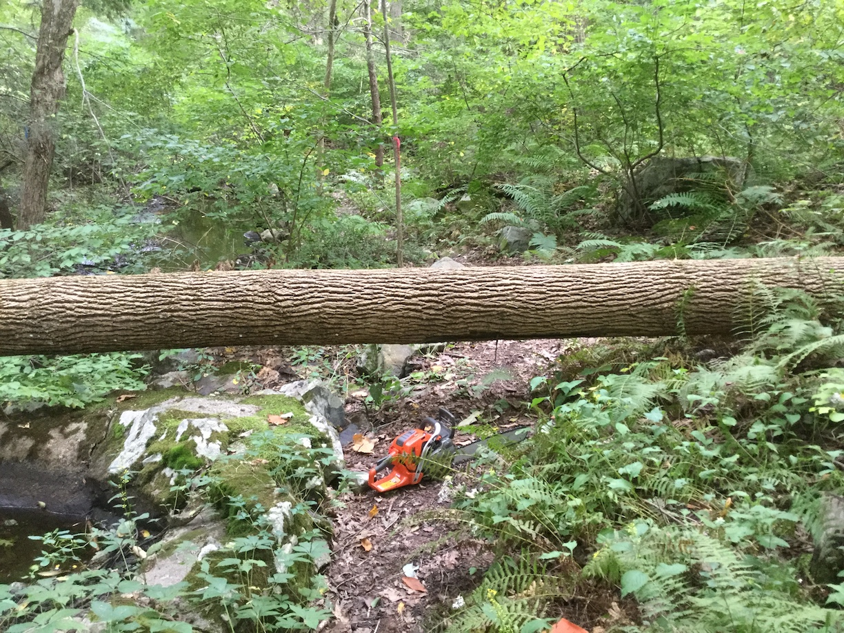 Fallen tree across Willow Road trail before clearing