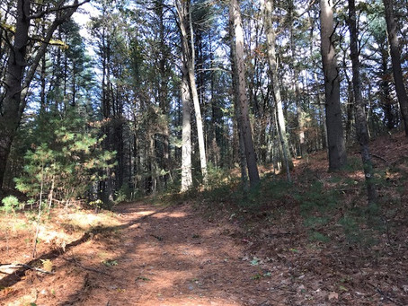 November 1, 2020: Rail Trail, Jericho Forest, Sunday Woods