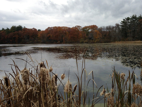 October 4th, 2020: College Pond trail walk - signup required!