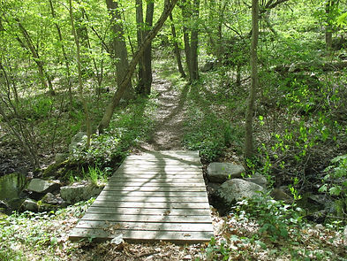 Wooden bridge across stream in woods with trail beyond