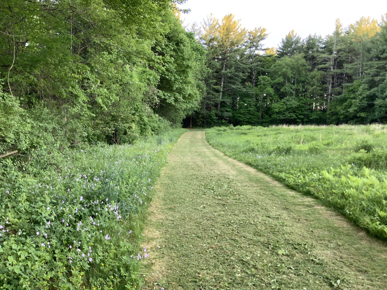 looking south along trail, geraniums at left edge