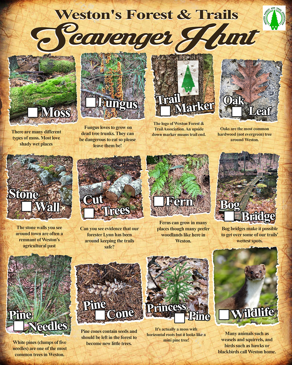 checklist of forest features for scavenger hunt