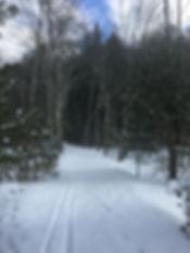 XC ski tracks on a snowy trail