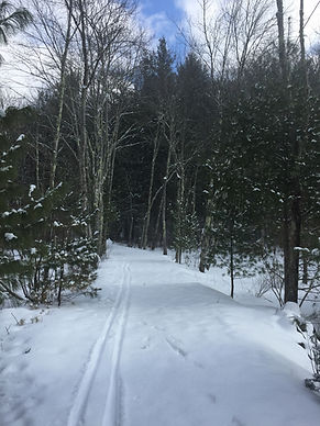 XC ski tracks on a snowy trail