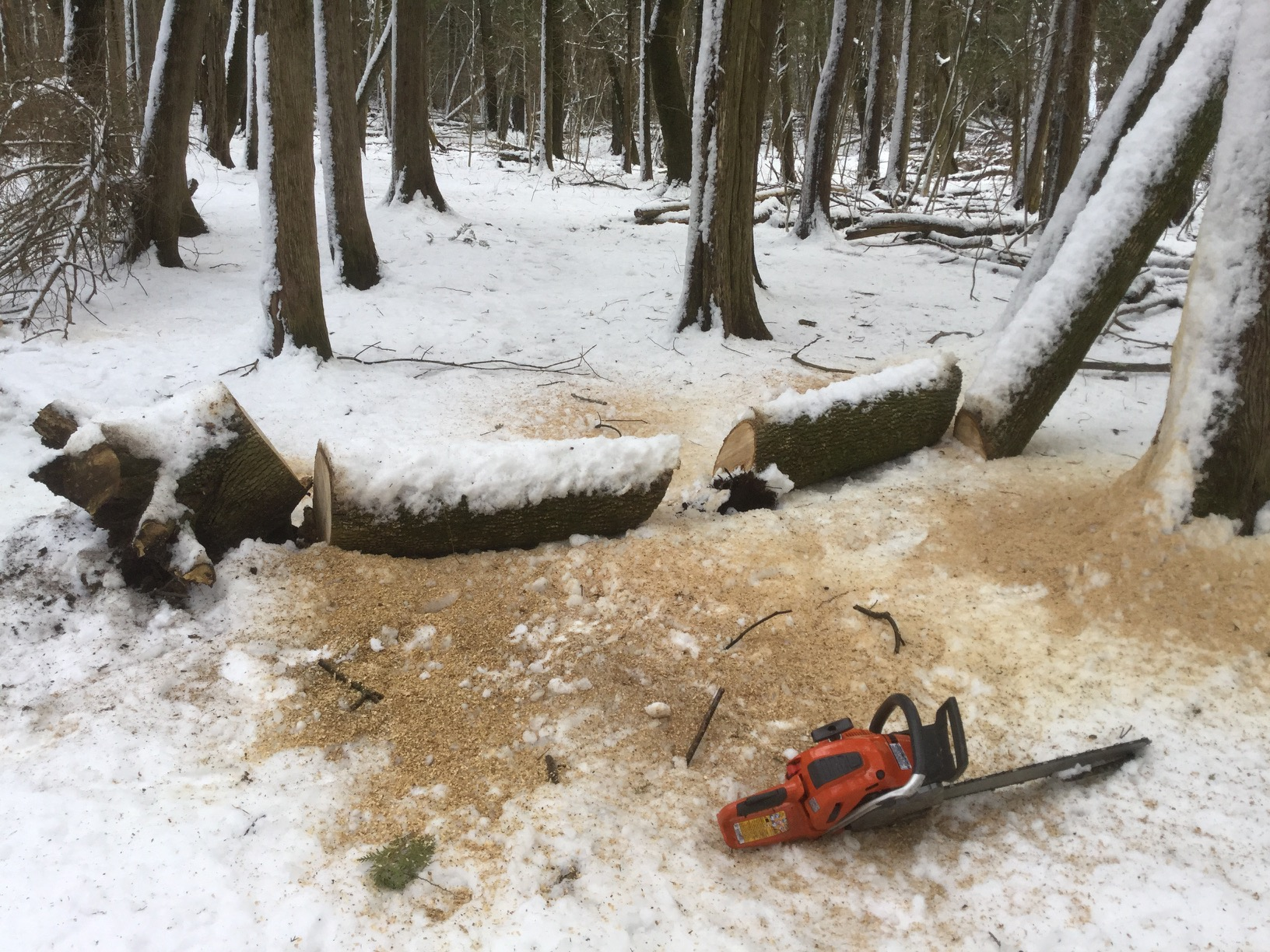 fallen tree across snowy trail sawn into sections, chainsaw in foreground