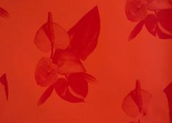 Australian Rosé (detail)