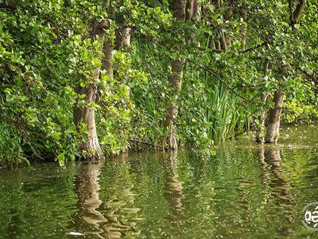au bord de l'étang,