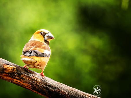 Un oiseau de nos forêts !