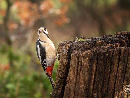 oiseau magnifique,