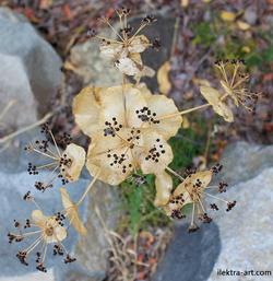 Wild Mountain Flower