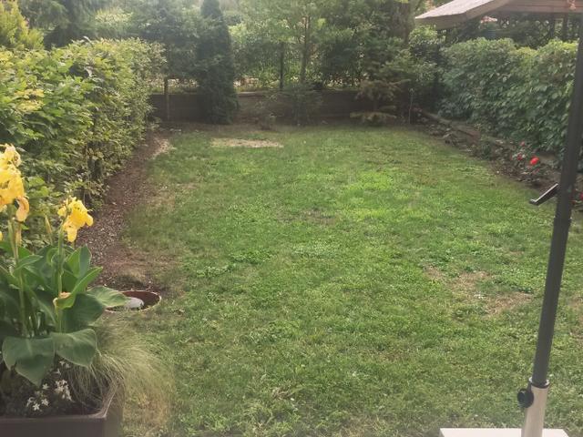 Zahrada před revitalizací