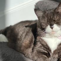 Pets of Turramurra - Willow the Cat